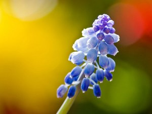Beautiful And Amazing Example Bokeh Photography